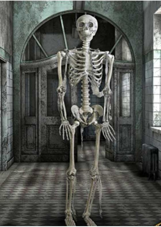 Skeleton Full Size